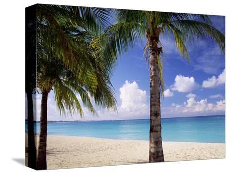 Palm Trees, Beach and Still Turquoise Sea, Seven Mile Beach, Cayman Islands, West Indies-Ruth Tomlinson-Stretched Canvas Print