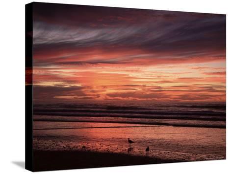 Eighty Mile Beach, Western Australia, Australia, Pacific-Jochen Schlenker-Stretched Canvas Print