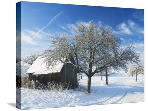 Barn and Apple Trees in Winter, Weigheim, Baden-Wurttemberg, Germany, Europe-Jochen Schlenker-Stretched Canvas Print