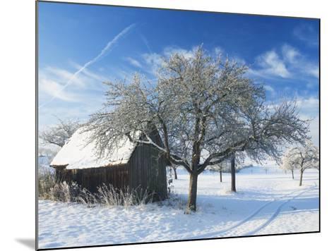 Barn and Apple Trees in Winter, Weigheim, Baden-Wurttemberg, Germany, Europe-Jochen Schlenker-Mounted Photographic Print