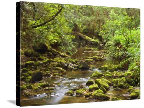 Creekton Rivulet, Southern Forests, Tasmania, Australia, Pacific-Jochen Schlenker-Stretched Canvas Print