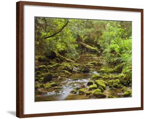 Creekton Rivulet, Southern Forests, Tasmania, Australia, Pacific-Jochen Schlenker-Framed Art Print