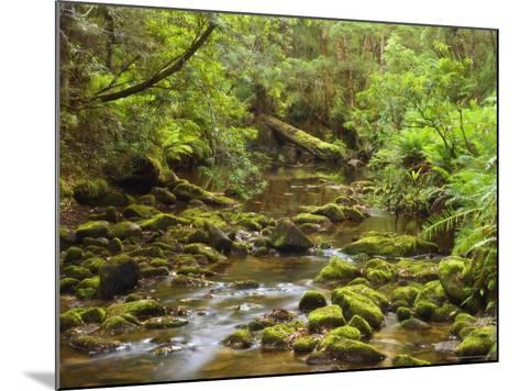 Creekton Rivulet, Southern Forests, Tasmania, Australia, Pacific-Jochen Schlenker-Mounted Photographic Print