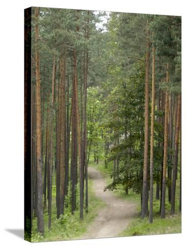 Path Through Pine Forest, Near Riga, Latvia, Baltic States, Europe-Gary Cook-Stretched Canvas Print