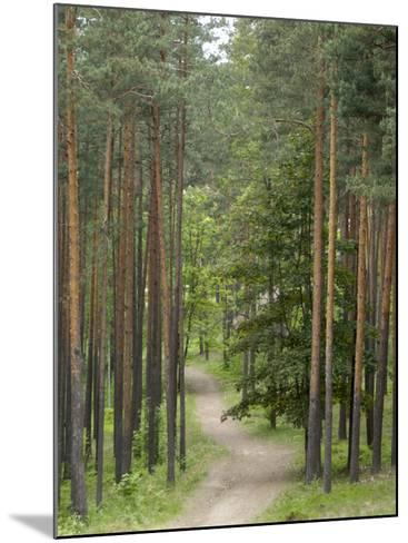 Path Through Pine Forest, Near Riga, Latvia, Baltic States, Europe-Gary Cook-Mounted Photographic Print