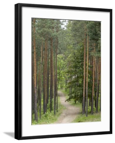 Path Through Pine Forest, Near Riga, Latvia, Baltic States, Europe-Gary Cook-Framed Art Print