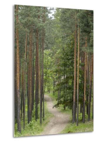 Path Through Pine Forest, Near Riga, Latvia, Baltic States, Europe-Gary Cook-Metal Print