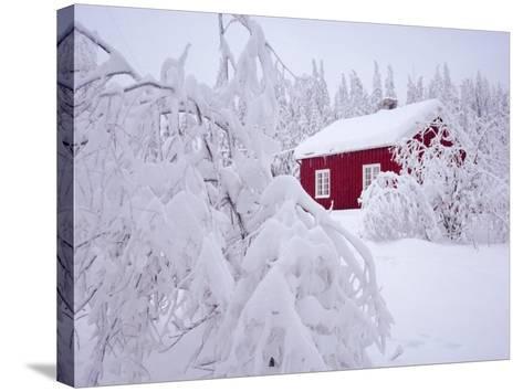 Nordmarka, Oslo, Norway, Scandinavia, Europe-Kim Hart-Stretched Canvas Print
