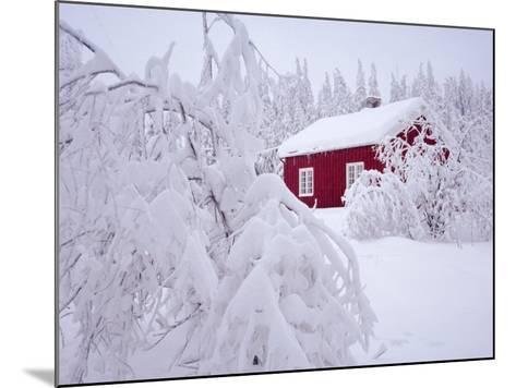 Nordmarka, Oslo, Norway, Scandinavia, Europe-Kim Hart-Mounted Photographic Print