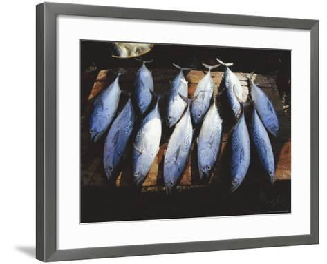 Fish for Sale in the Market at Hoi an on the Thu Bon River South of Danang, Vietnam, Asia-Robert Francis-Framed Art Print