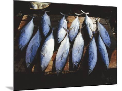Fish for Sale in the Market at Hoi an on the Thu Bon River South of Danang, Vietnam, Asia-Robert Francis-Mounted Photographic Print