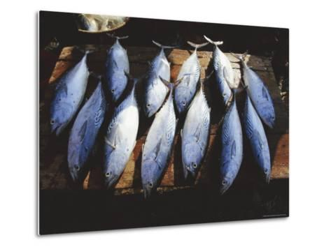 Fish for Sale in the Market at Hoi an on the Thu Bon River South of Danang, Vietnam, Asia-Robert Francis-Metal Print