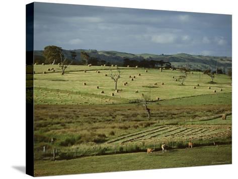 Farmland Near Willunga, Fleurieu Peninsula, South of Adelaide, South Australia, Australia, Pacific-Robert Francis-Stretched Canvas Print