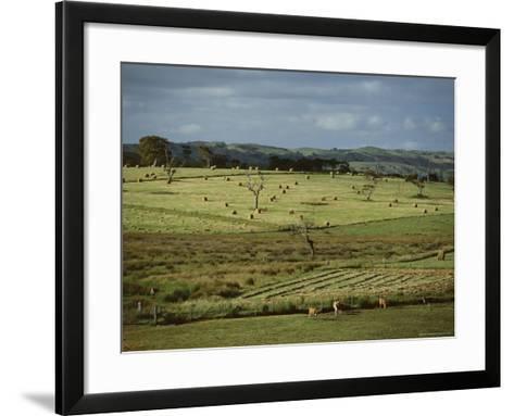 Farmland Near Willunga, Fleurieu Peninsula, South of Adelaide, South Australia, Australia, Pacific-Robert Francis-Framed Art Print