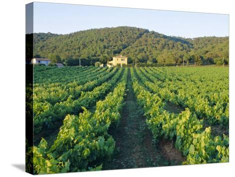 Vineyard, the Var, Cote d'Azur, Provence, France-J P De Manne-Stretched Canvas Print