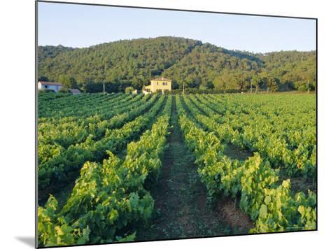 Vineyard, the Var, Cote d'Azur, Provence, France-J P De Manne-Mounted Photographic Print