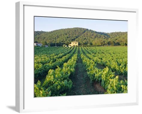 Vineyard, the Var, Cote d'Azur, Provence, France-J P De Manne-Framed Art Print