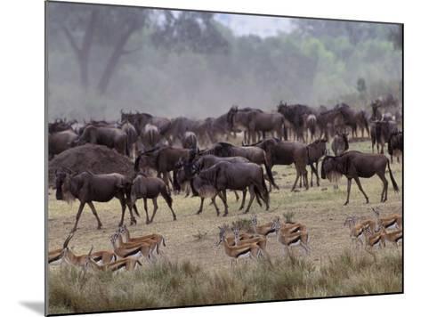 Herds of Gazelle, Zebra, Wildebeest, Topi, Masai Mara Game Reserve, Kenya-Art Wolfe-Mounted Photographic Print