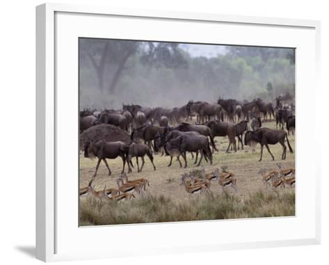 Herds of Gazelle, Zebra, Wildebeest, Topi, Masai Mara Game Reserve, Kenya-Art Wolfe-Framed Art Print