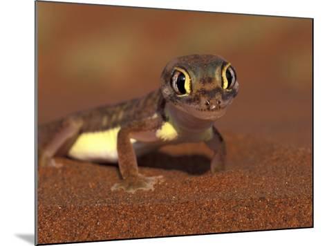 Web-footed Gecko, Namib National Park, Namibia-Art Wolfe-Mounted Photographic Print