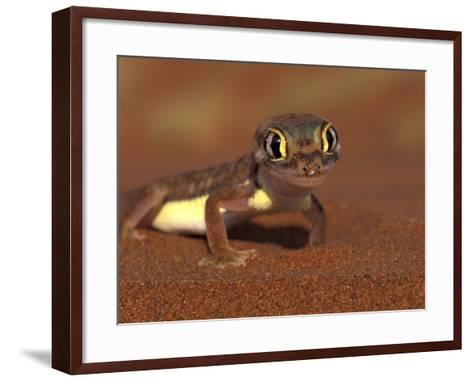 Web-footed Gecko, Namib National Park, Namibia-Art Wolfe-Framed Art Print