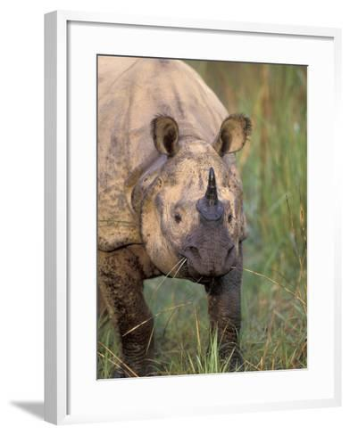 Indian Rhinoceros, Royal Chitwan National Park, Nepal-Art Wolfe-Framed Art Print