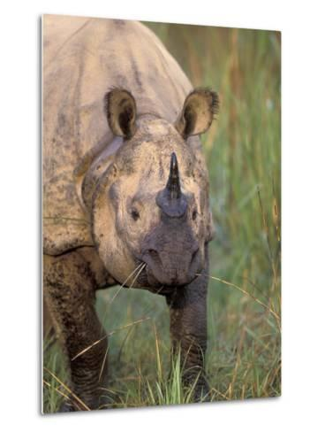 Indian Rhinoceros, Royal Chitwan National Park, Nepal-Art Wolfe-Metal Print