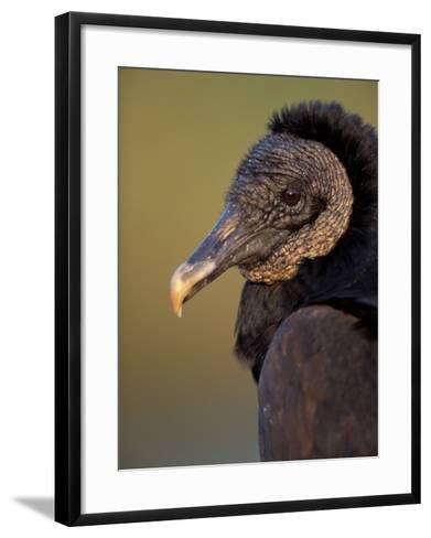 Black Vulture, Everglades National Park, Florida, USA-Art Wolfe-Framed Art Print