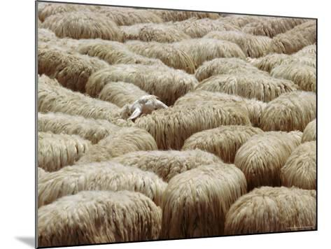 Flock of Sheep, Sardinia, Italy, Mediterranean, Europe-Oliviero Olivieri-Mounted Photographic Print
