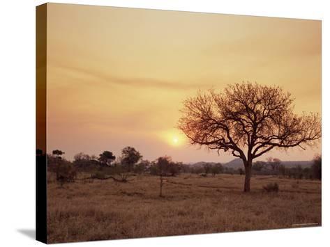 Mala Mala Game Reserve, Sabi Sand Park, South Africa, Africa-Sergio Pitamitz-Stretched Canvas Print