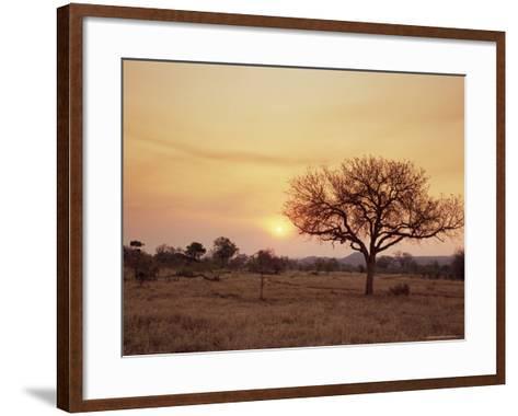 Mala Mala Game Reserve, Sabi Sand Park, South Africa, Africa-Sergio Pitamitz-Framed Art Print