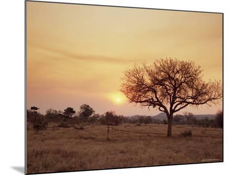 Mala Mala Game Reserve, Sabi Sand Park, South Africa, Africa-Sergio Pitamitz-Mounted Photographic Print