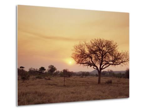 Mala Mala Game Reserve, Sabi Sand Park, South Africa, Africa-Sergio Pitamitz-Metal Print