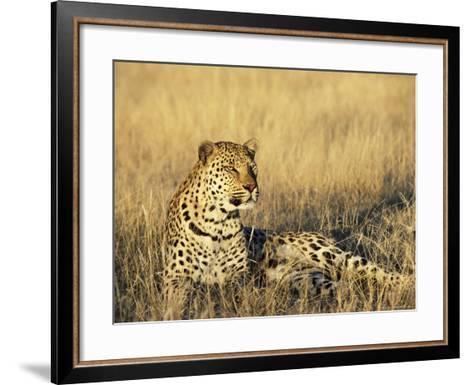 Leopard, Panthera Pardus, in Captivity, Namibia, Africa-Ann & Steve Toon-Framed Art Print