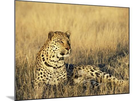 Leopard, Panthera Pardus, in Captivity, Namibia, Africa-Ann & Steve Toon-Mounted Photographic Print