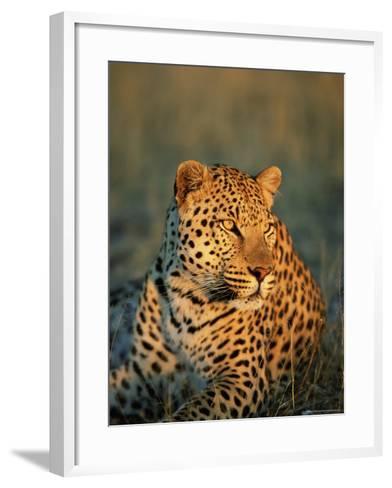 Male Leopard, Panthera Pardus, in Captivity, Namibia, Africa-Ann & Steve Toon-Framed Art Print
