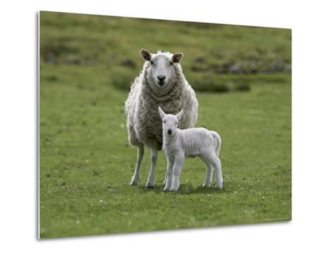 Ewe with Lamb, Scotland, United Kingdom, Europe-Ann & Steve Toon-Metal Print