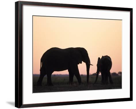 African Elephant, (Loxodonta Africana), Chobe River, Chobe National Park, Botswana-Thorsten Milse-Framed Art Print