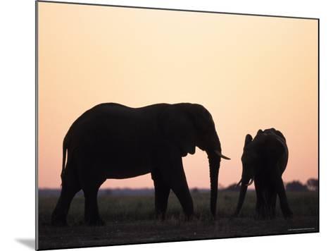 African Elephant, (Loxodonta Africana), Chobe River, Chobe National Park, Botswana-Thorsten Milse-Mounted Photographic Print