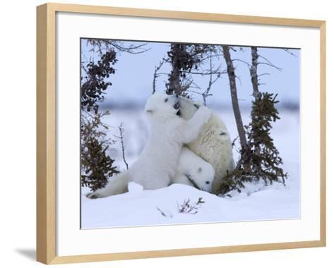 Polar Bear with Cubs, (Ursus Maritimus), Churchill, Manitoba, Canada-Thorsten Milse-Framed Art Print