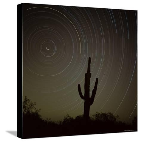 Star Trek Over Cacti, Tracing Stars as They Move Round North Star, Tucson, Arizona, USA-Tony Gervis-Stretched Canvas Print