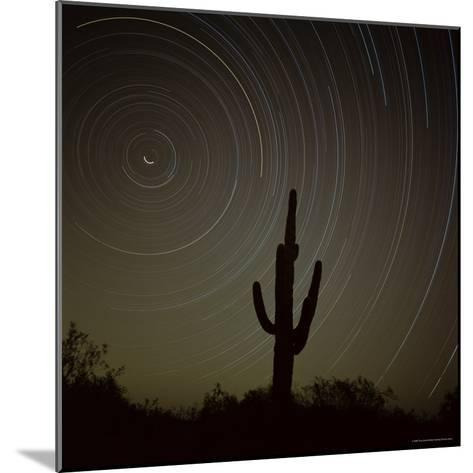 Star Trek Over Cacti, Tracing Stars as They Move Round North Star, Tucson, Arizona, USA-Tony Gervis-Mounted Photographic Print