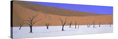 Panoramic View of Dead Trees and Orange Sand Dunes, Dead Vlei, Namib Desert, Namibia, Africa-Lee Frost-Stretched Canvas Print