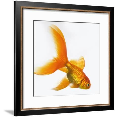 Goldfish-Mark Mawson-Framed Art Print