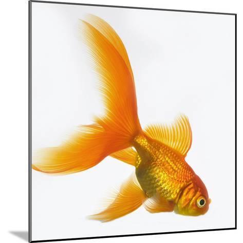 Goldfish-Mark Mawson-Mounted Photographic Print