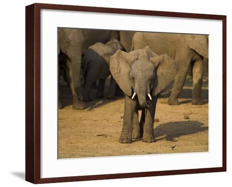 Baby Elephant, Eastern Cape, South Africa-Ann & Steve Toon-Framed Art Print