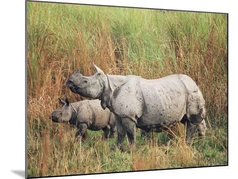 Indian One-Horned Rhinoceros (Rhino), Rhinoceros Unicornis, with Calf, Assam, India-Ann & Steve Toon-Mounted Photographic Print
