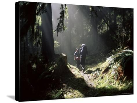 Backpackers in Steamy Light, Queets Vall, Olympic National Park, Washington State, USA-Aaron McCoy-Stretched Canvas Print
