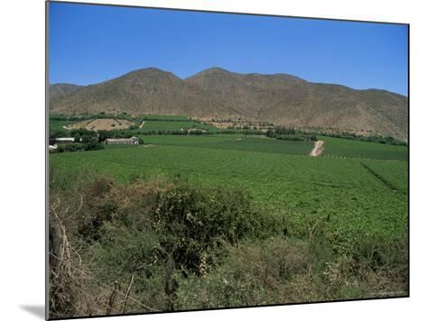 Grape Vines in the Valle De Elqui, Chile, South America-Aaron McCoy-Mounted Photographic Print