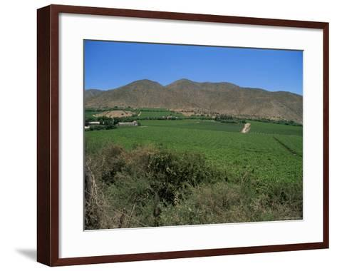 Grape Vines in the Valle De Elqui, Chile, South America-Aaron McCoy-Framed Art Print
